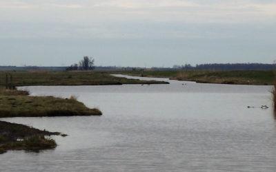 Snoeken in polder Arkemheen